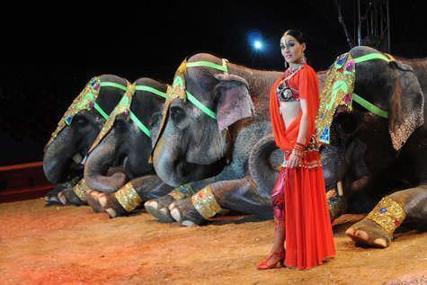 Gran Circo Mundial elefantes