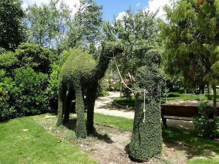Camello del Bosque Encantado
