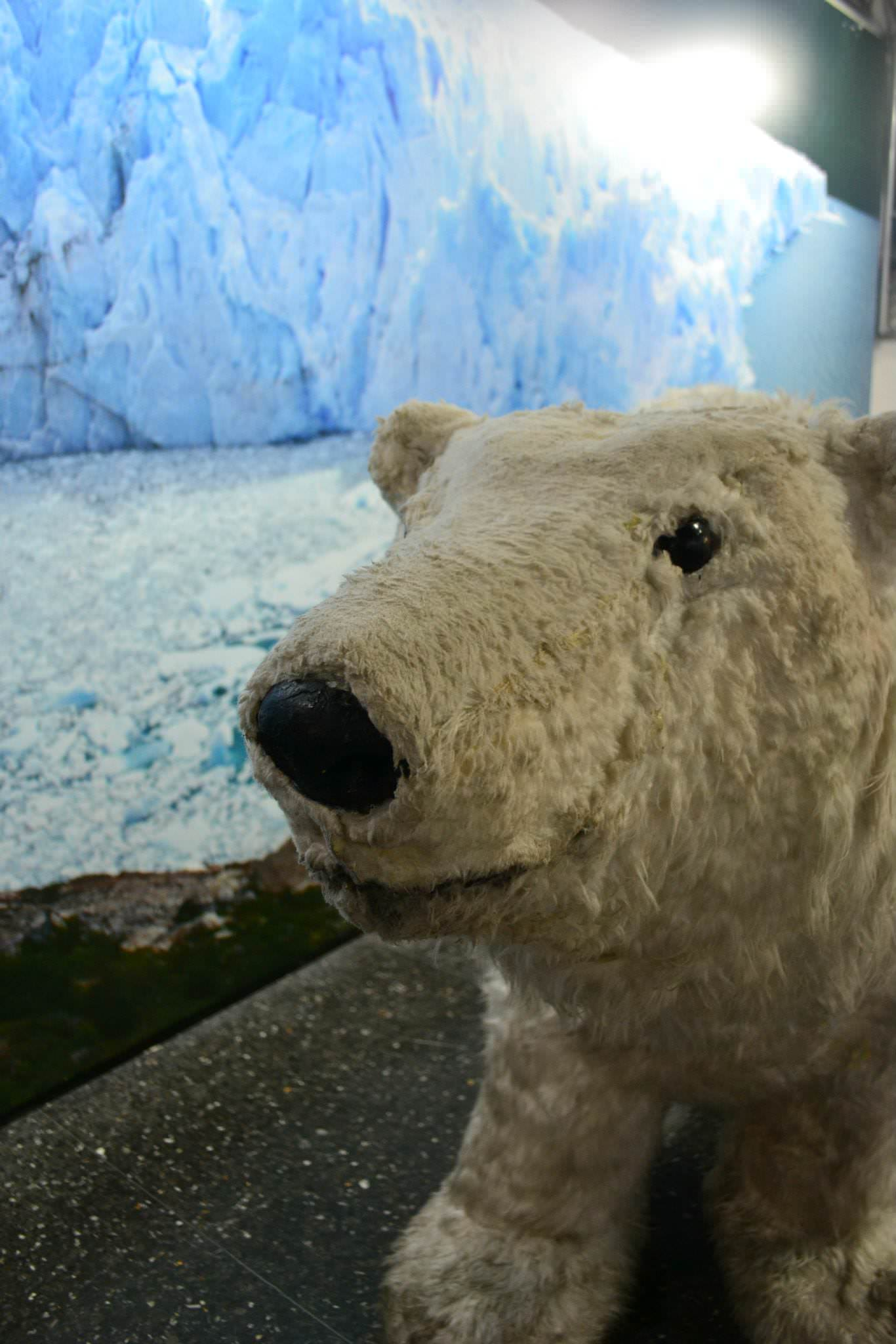 Un oso polar a tamaño natural te recibe en el Ice Bar