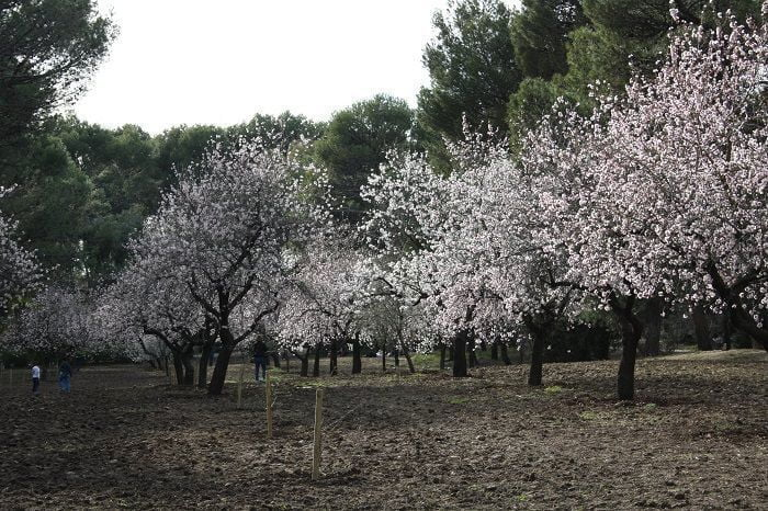 Jardín histórico de Almendros