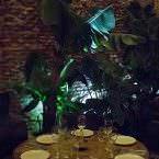 El Patio, mesa junto a una planta enorme