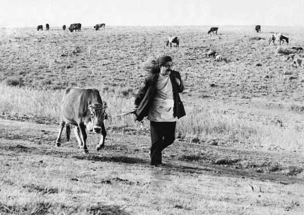 fotograma extraído de la película Gaav (la vaca)
