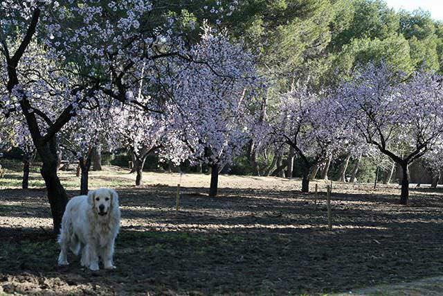 Un buen día con tu perro en Madrid - Un buen día en Madrid