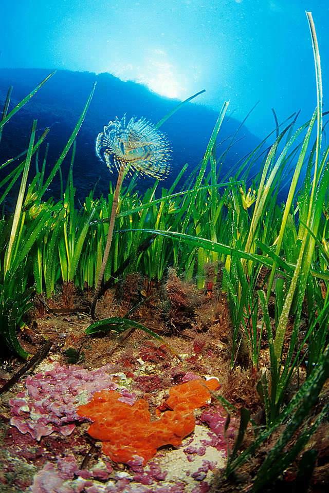 Tesoro natural marino