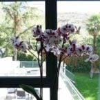 Orquidea habitación Niwa