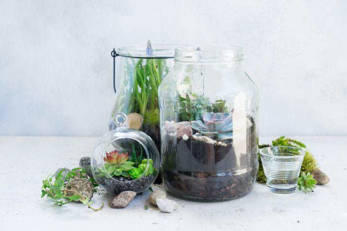 Aprende a crear y cuidar tu terrario de suculentas