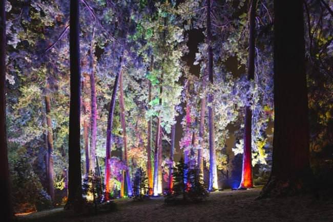 El Real Jardín Botánico luce de la mejor forma.