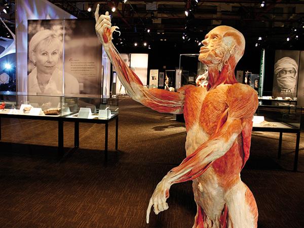 Exposición body worlds